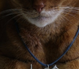 Animal Cruelty: Mischka reluctantly models Lil'dog, sterling silver pendant